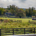 wattles_farm (14 of 22)